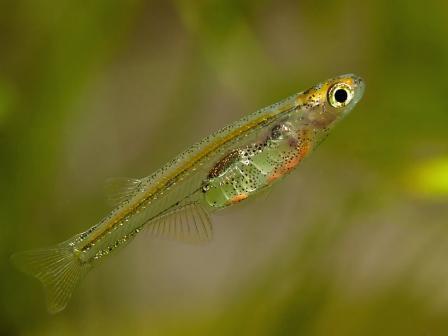 маленькие рыбки