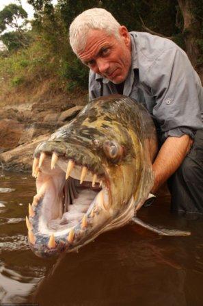 рыба-голиаф