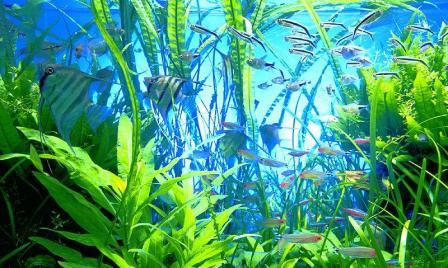 перевозка аквариума с рыбками