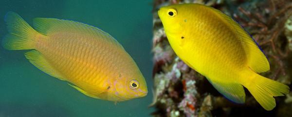 рыбы видят ультрафиолет